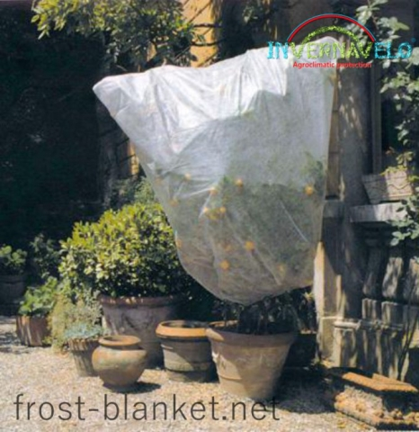 Invernavelo Frost blanket for protection of fruit trees like this orange tree