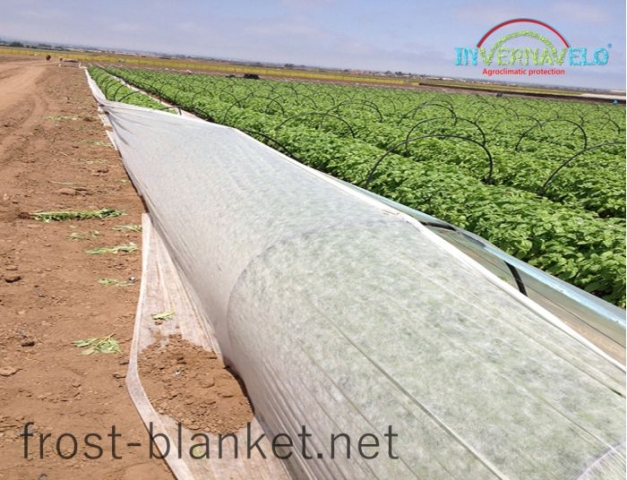 Invernavelo frost blanket over  peppers crop cultivation