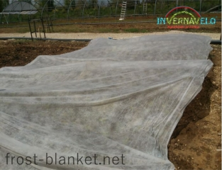 Invernavelo frost blanket covering vegetables shoots