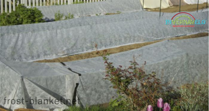 Rows of vegetables with frost blanket protection