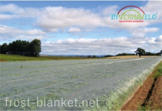 Light frost blanket as protector on vegetables crop field  work very well against insects and birds attack