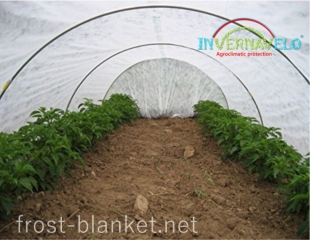 Peppers tunnel cover with frost blanket to protect against aphids, insects and birds