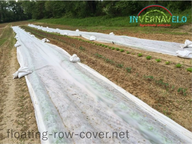 Invernavelo blank frost protector againts insects and birds on open field
