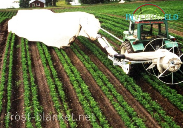 installing  Invernavelo frost blanket protector with specialized agricultural machinery