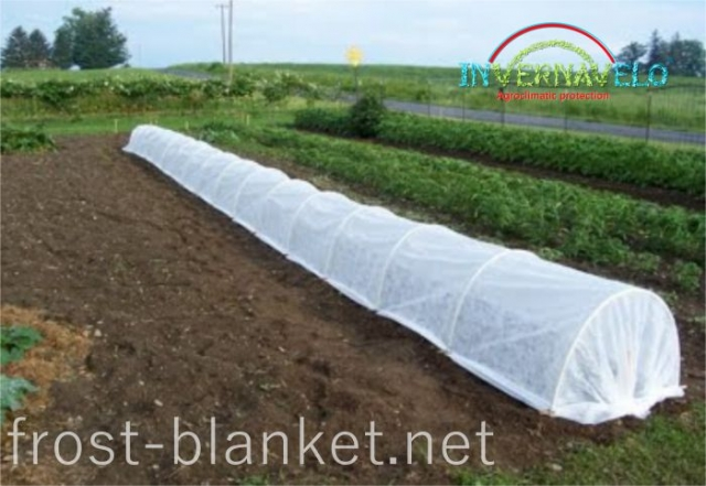 view of Vegetables crop cultivation with Invernavelo frost blanket