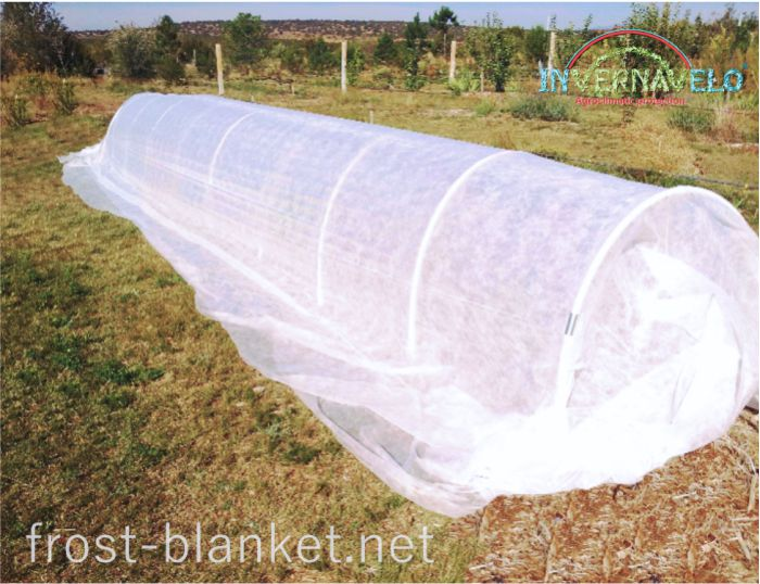 microtunnel with frost blanket protection againts insects and birds attack
