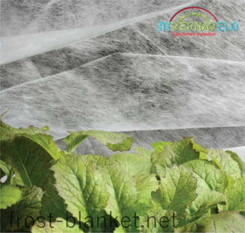 Vegetables crop protected with invervanelo frost blanket  close up