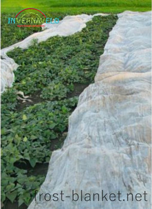 vegetables cultivation with invernavelo frost blanket protection