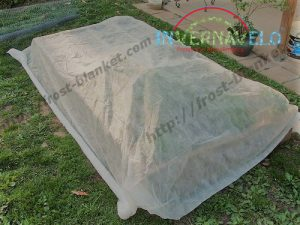 frost cloth covering crops
